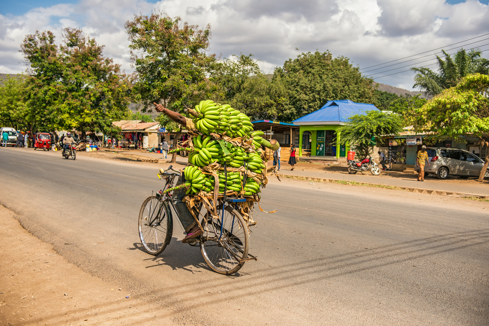 Transportation of bananas in developed countries nowadays (Uganda)