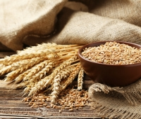 Wheat: Health Benefits, Side Effects, Nutrition Facts, Fun Facts and History