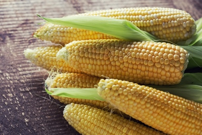 Yellow sweet corn cob