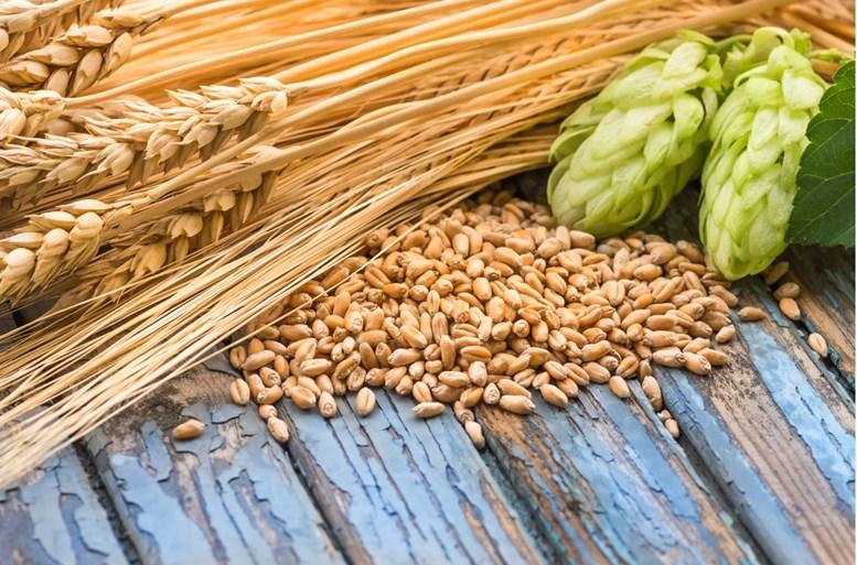 hop cones, grain barley, barley ears