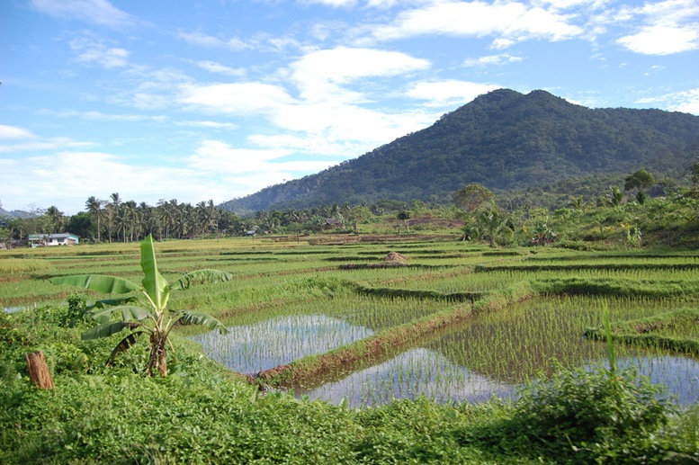 rice patties near claveria, ilocos norte, philippines