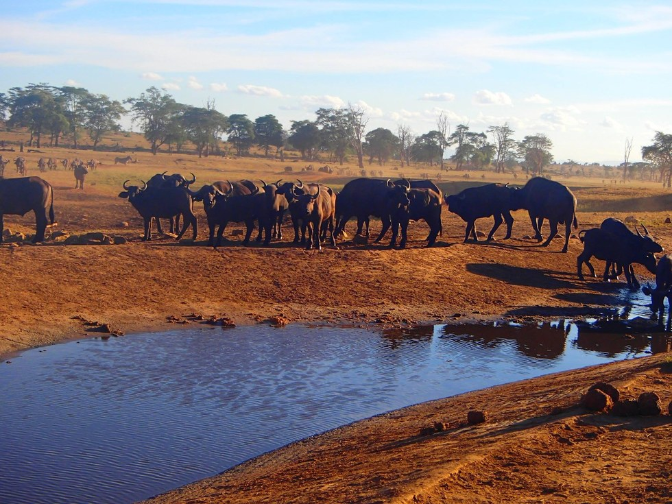 Animals drinking water fromt the water hole