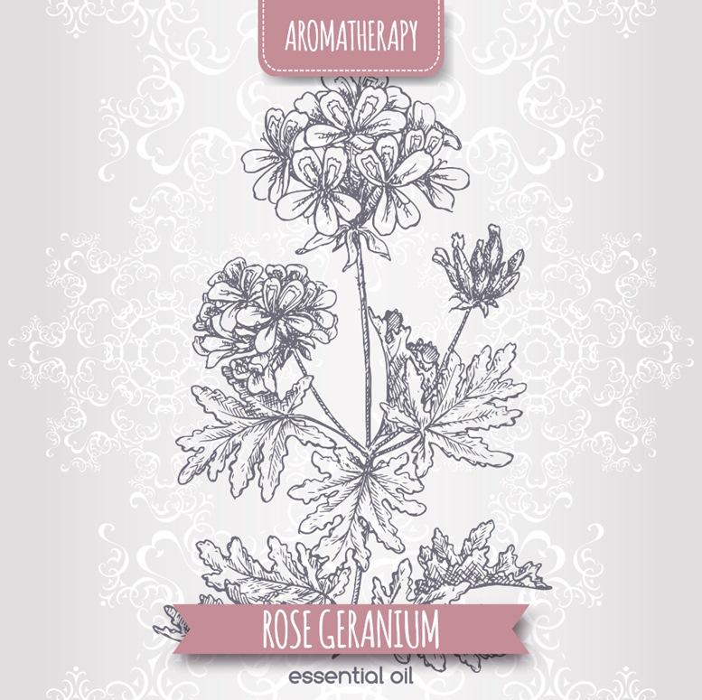 Aromatherapy Rose Geranium
