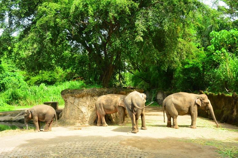 Bali Marine & Safari Park - Elepants