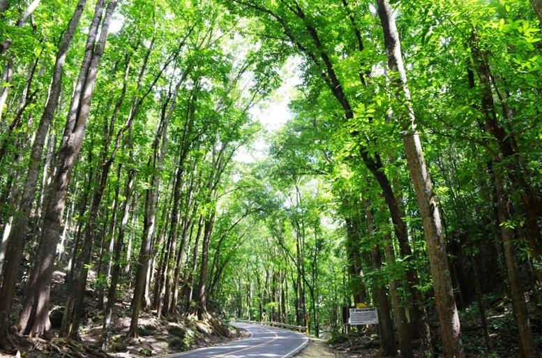 Bilar-Loboc Manmade Forest
