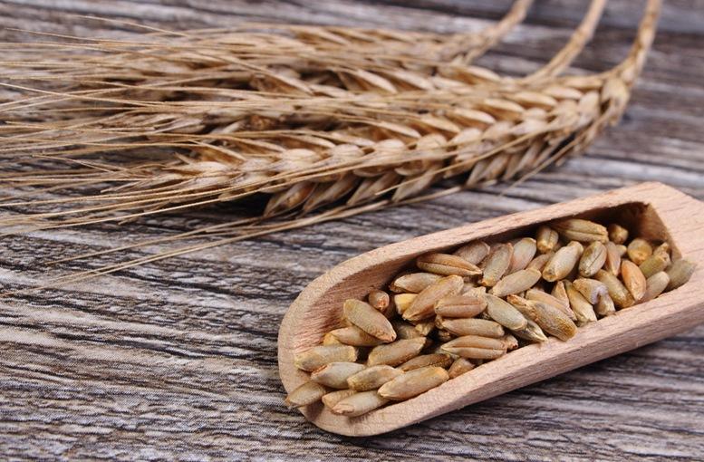 Ear of Rye and raw Rye Grains