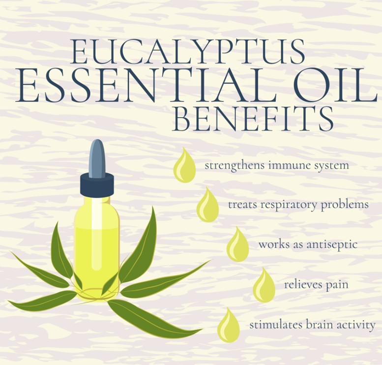 Eucalyptus Essential Oil Benefits - Infographic