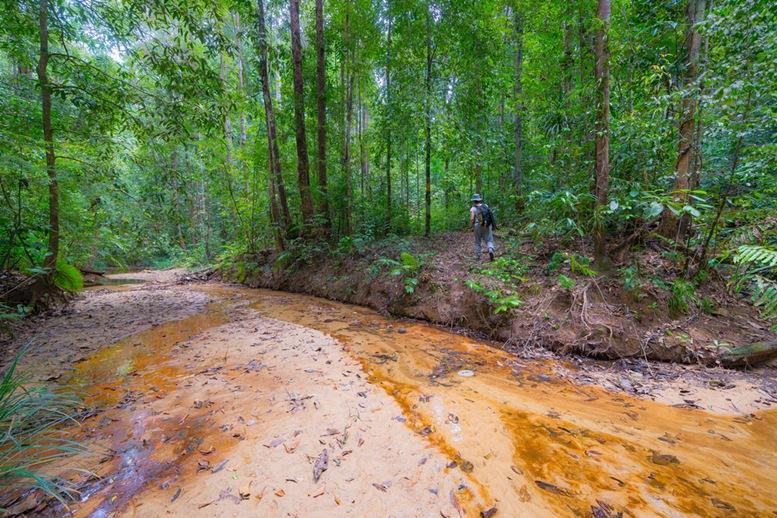 Exploring the Kuching Wetland National Park