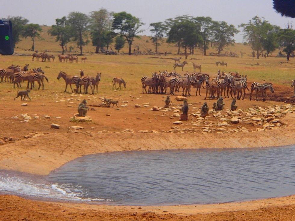 Filling up drinking water for the animals