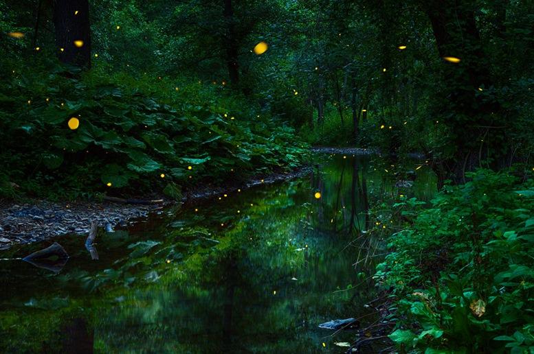 Fireflies Garden