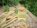 Top 10 Health Benefits of Lemongrass Essential Oil