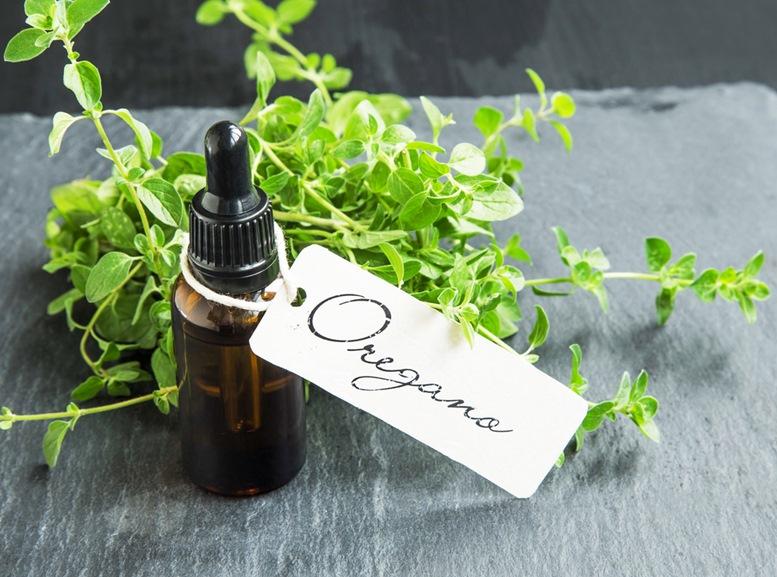 Health Benefits of Oregano Essential Oil - Featured Image