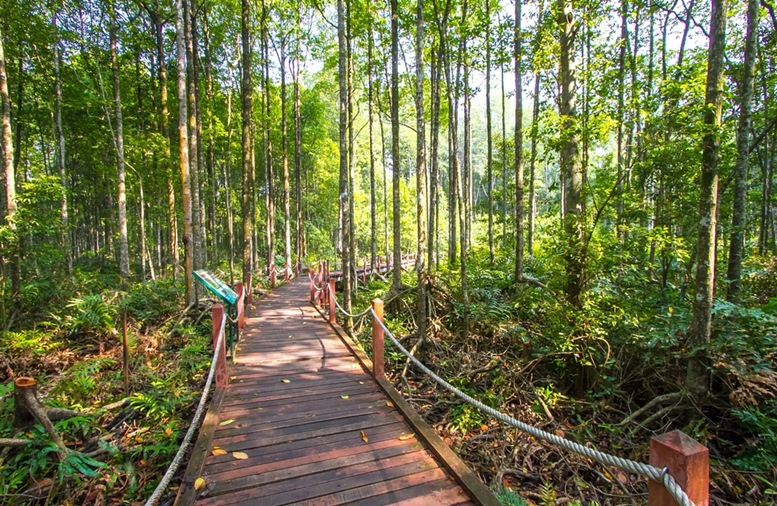 Mangrove forest in Kuala Sepetang Malaysia