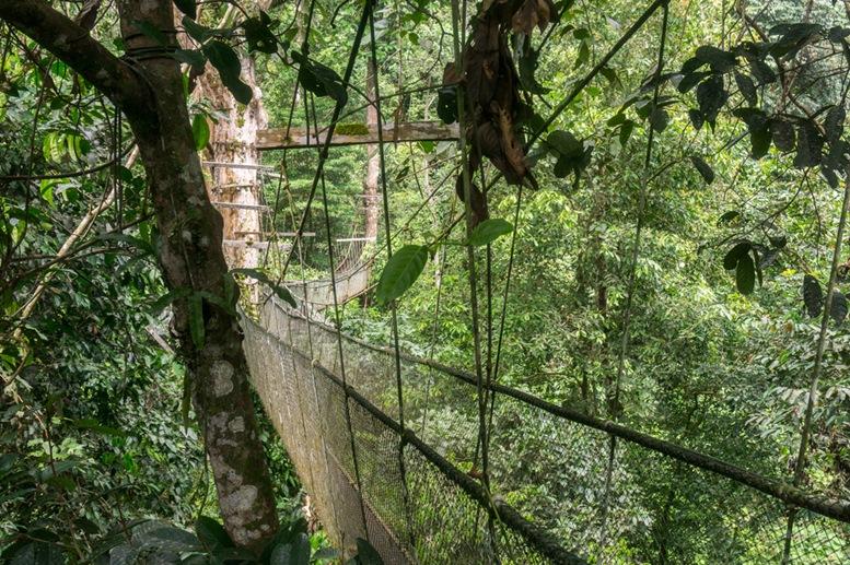 Mulu National Park Canopy Walk 2