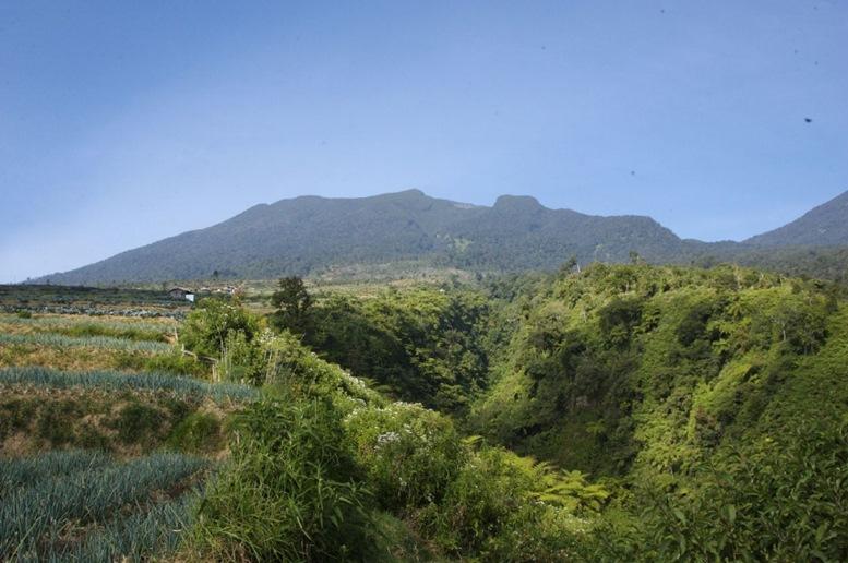 Pangrango National Park