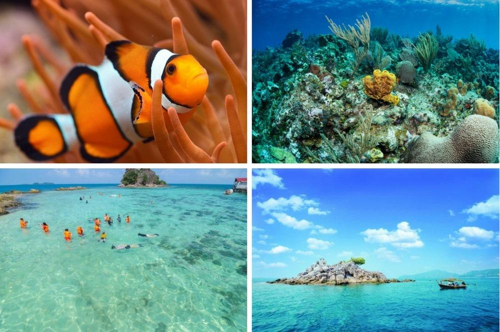 Petong Island Reefs Adventure