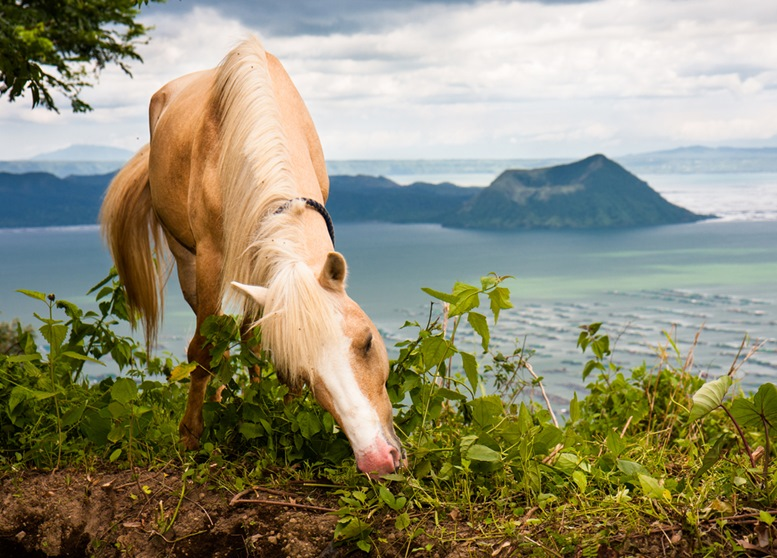 Pretty horse with Taal lake and Taal Volcano as a beautiful background