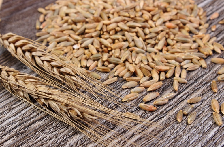 Raw Rye Grains