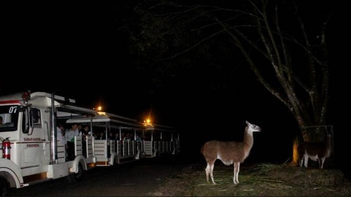 Safari Night Tour