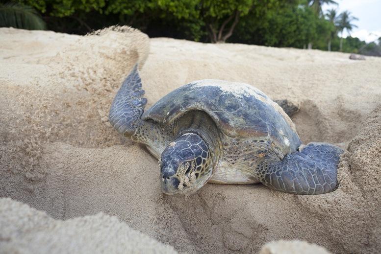 Selingan Turtle Island Park