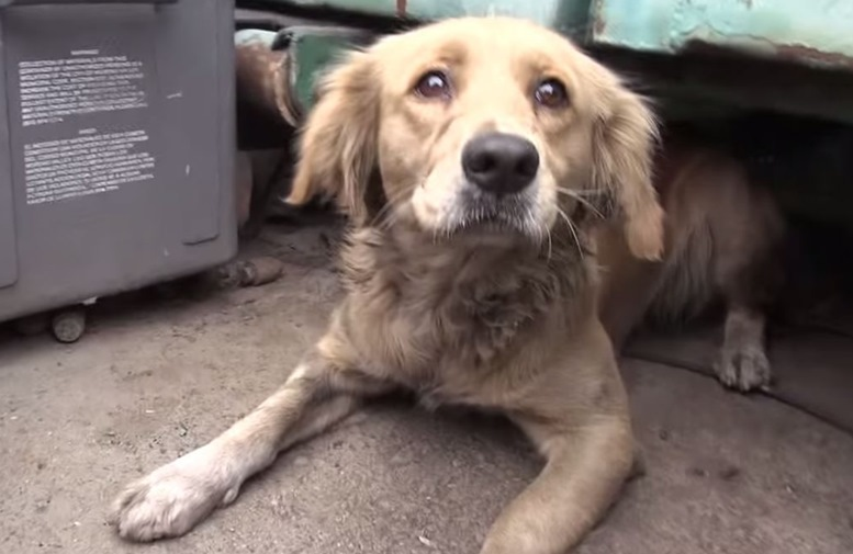 She Was Terrified of Any Human Contact, But After 4 hours, Rescuers Gain Her Trust - Featured Image