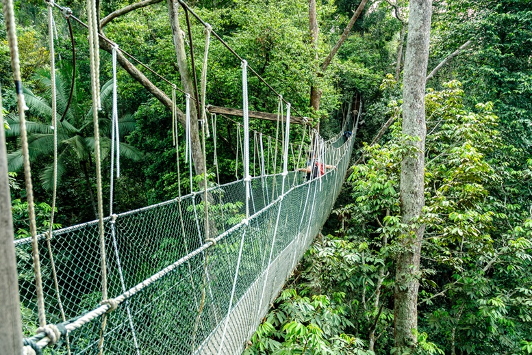 Taman Negara (Kuala Koh) Canopy Bridge
