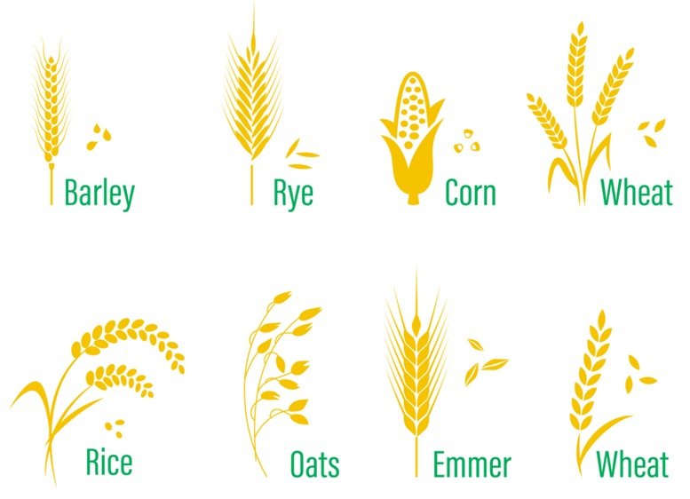 The Difference between different grains. Barley, Rye, Corn, Wheat, Rice, Oats, Emmer, Wheat